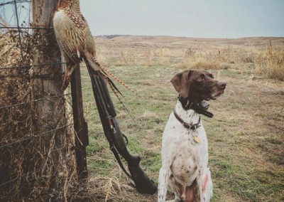 pheasant hunting advertising agency